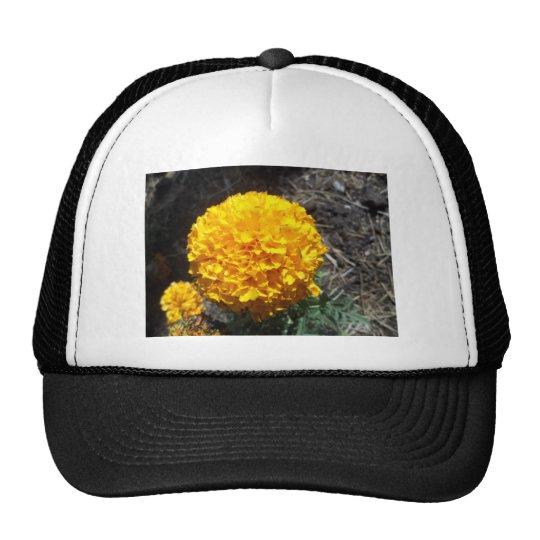 Flor amarilla gorra