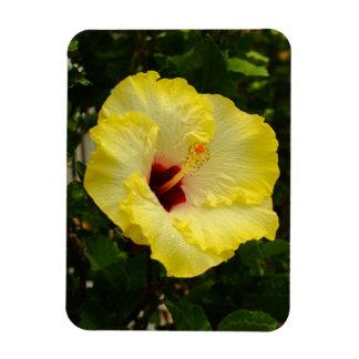 Flor amarilla grande del hibisco iman de vinilo