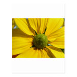 Flor amarilla grande tarjetas postales
