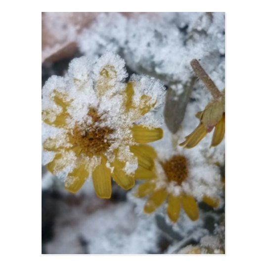 Flor amarilla helada tarjetas postales