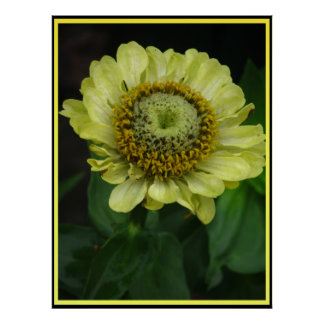 Flor amarilla hermosa póster