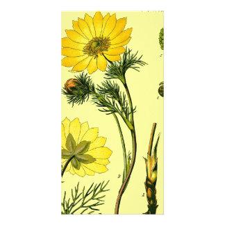 Flor amarilla hermosa tarjetas personales con fotos