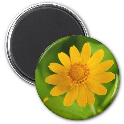 Flor amarilla imán redondo 5 cm