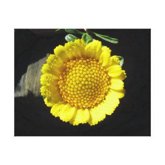 Flor amarilla impresión de lienzo