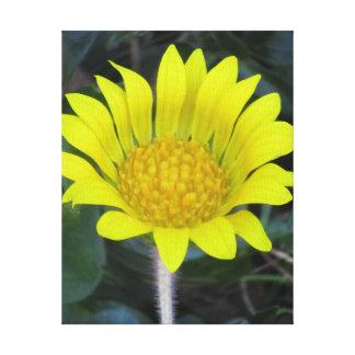 Flor amarilla impresión en lienzo estirada