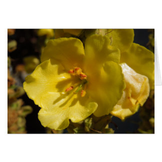 Flor amarilla macra de Mullein Tarjeta De Felicitación