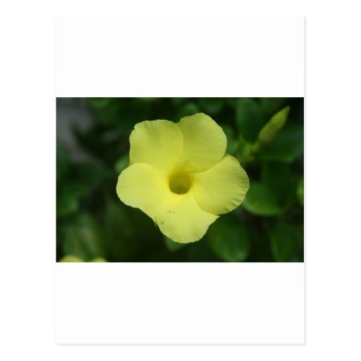 Flor amarilla postal