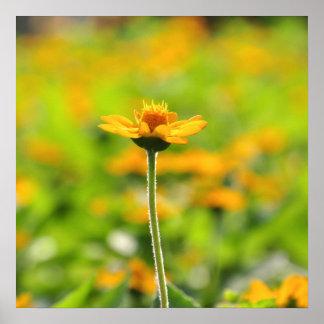 Flor amarilla póster