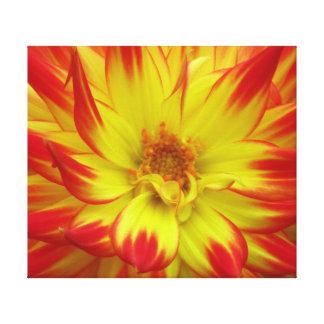 Flor amarilla roja de Dalia Lona Envuelta Para Galerias