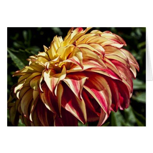 Flor amarilla roja y de oro de la dalia tarjeta pequeña