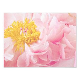 Flor amarilla rosa clara del Peony - flores de los Foto