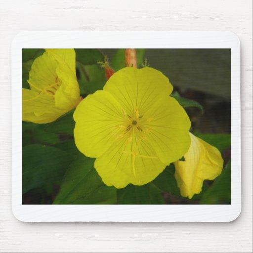 Flor amarilla tapetes de ratones