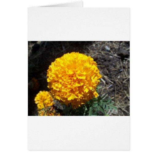 Flor amarilla tarjeta