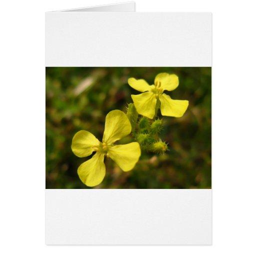 Flor amarilla tarjeta de felicitación