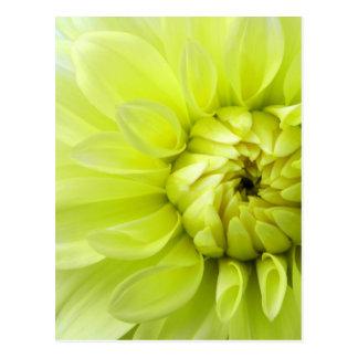 Flor amarilla tarjetas postales