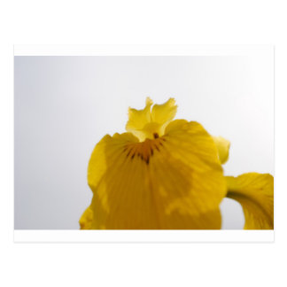 Flor amarilla tarjeta postal