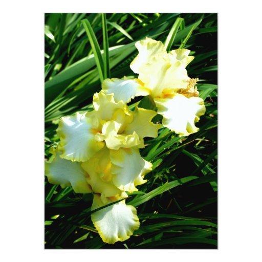 """Flor amarilla y blanca del iris invitación 5.5"""" x 7.5"""""""