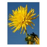 Flor amarilla y cielo azul postales