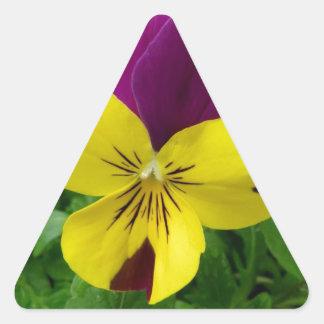 Flor amarilla y púrpura de la viola (pensamiento) pegatina triangular