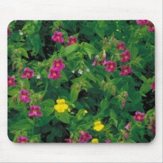 Flor amarilla y púrpura del mono tapete de ratón