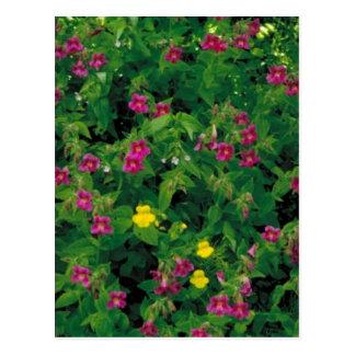 Flor amarilla y púrpura del mono tarjeta postal