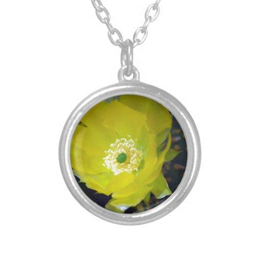 Flor amarilla y significado del cactus colgante redondo