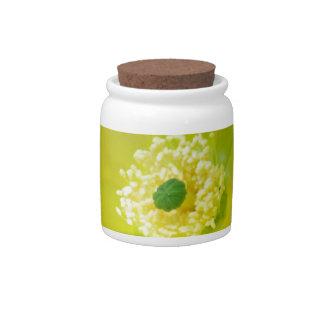 Flor amarilla y significado del cactus jarra para caramelo