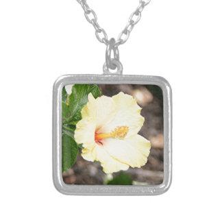 Flor amarillo claro 2 del hibisco collar plateado