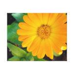 Flor amarillo del verano impresiones en lona