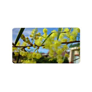 Flor amarillo del zarzo contra el cielo azul etiquetas de dirección