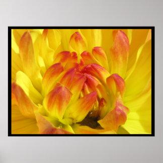 Flor amarillo-naranja póster