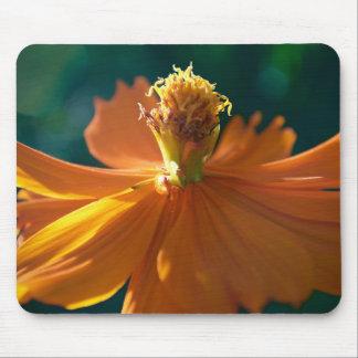 Flor anaranjada (cercana) mousepad