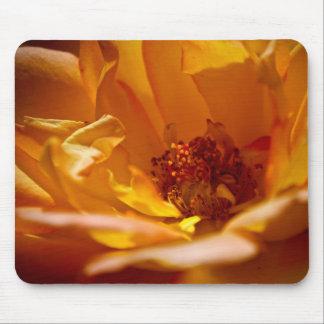 Flor anaranjada (cercana) tapetes de ratón