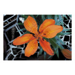 Flor anaranjada con el fondo posters