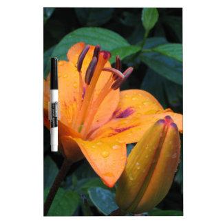 Flor anaranjada con las gotas de agua pizarra blanca
