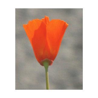 Flor anaranjada de California Impresiones En Lona Estiradas