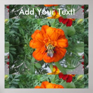 Flor anaranjada de la abeja de la maravilla póster