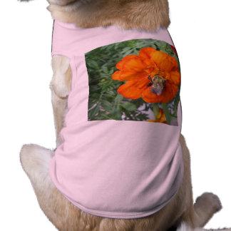 Flor anaranjada de la abeja de la maravilla ropa de mascota