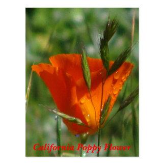 Flor anaranjada de la amapola de California Tarjeta Postal