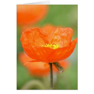 Flor anaranjada de la amapola de Islandia Tarjeton
