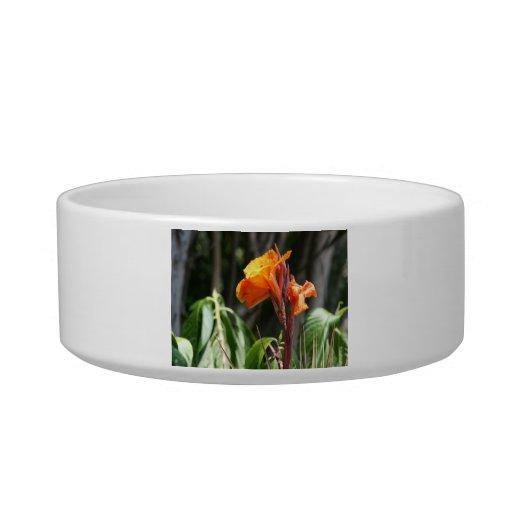 flor anaranjada de la ave del paraíso tazón para gato