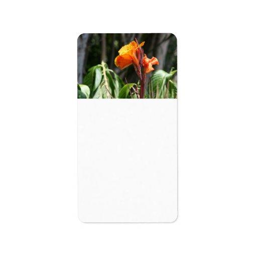 flor anaranjada de la ave del paraíso etiquetas de dirección