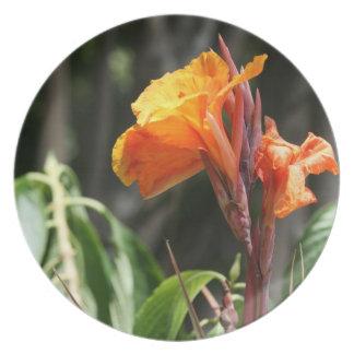 flor anaranjada de la ave del paraíso plato