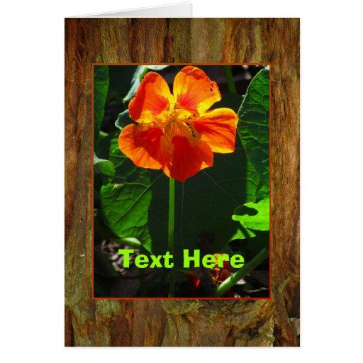 Flor anaranjada de la capuchina tarjeta de felicitación