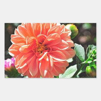 Flor anaranjada de la dalia