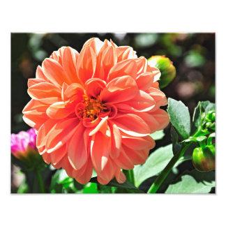 Flor anaranjada de la dalia fotografías
