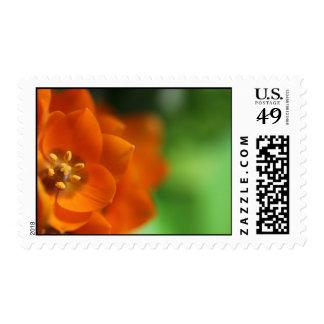 Flor anaranjada de la estrella sellos