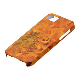 Flor anaranjada de la maravilla iPhone 5 cárcasa