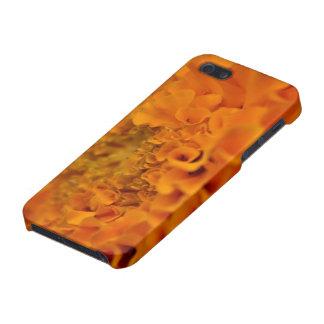 Flor anaranjada de la maravilla iPhone 5 coberturas