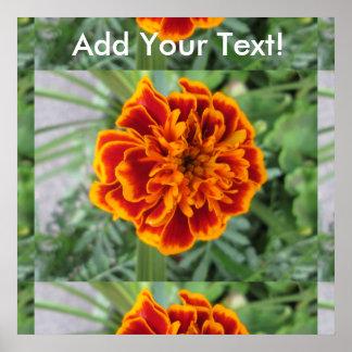 Flor anaranjada de la maravilla póster